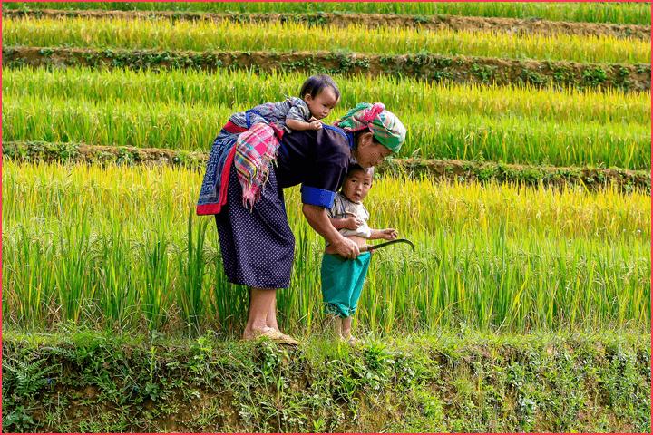 食料自給率と食育に学ぶこと